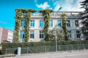 Denkmalpflege Fassade Kletterpflanzen